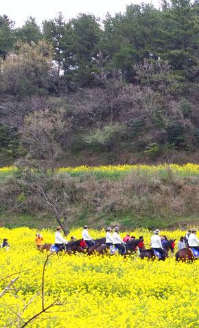 서귀포 유채꽃 국제걷기대회 대표이미지
