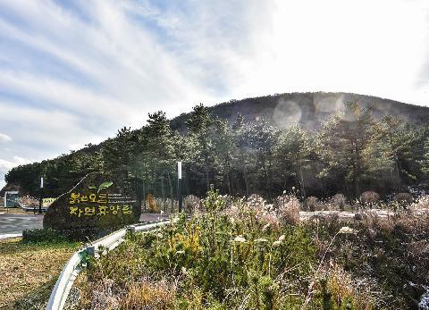 Buleun Oreum Natural Recreation Forest