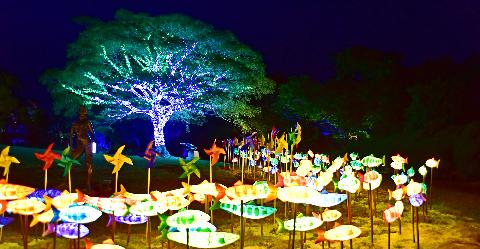 10 Great Spots for August 'Ah, the summer evening. Let's enjoy Jeju nights!' 대표이미지