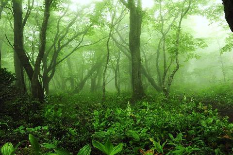 Saryeoni Forest Path 대표이미지