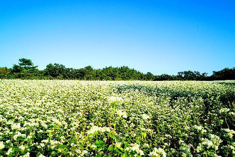 ドキドキ秋の花旅、花道を歩こう「済州、秋の花旅」 대표이미지