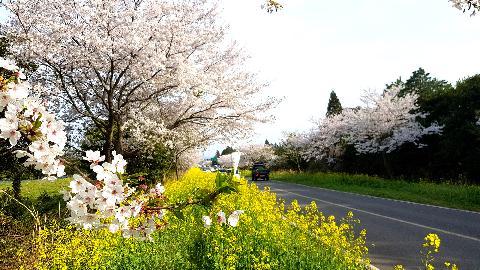 花道に沿ってシャラルラ <4月済州、花道を歩こう> 대표이미지